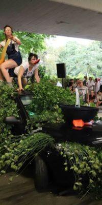 Performance Mimosa Justyna